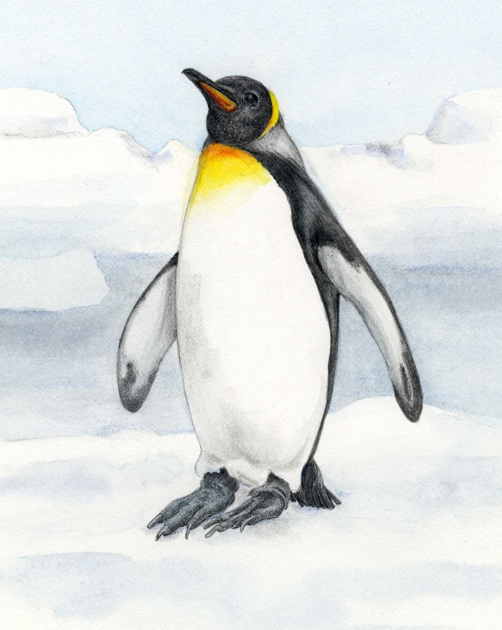 Black Bumble Bee >> Emperor Penguin - Animals At Risk from Climate Change