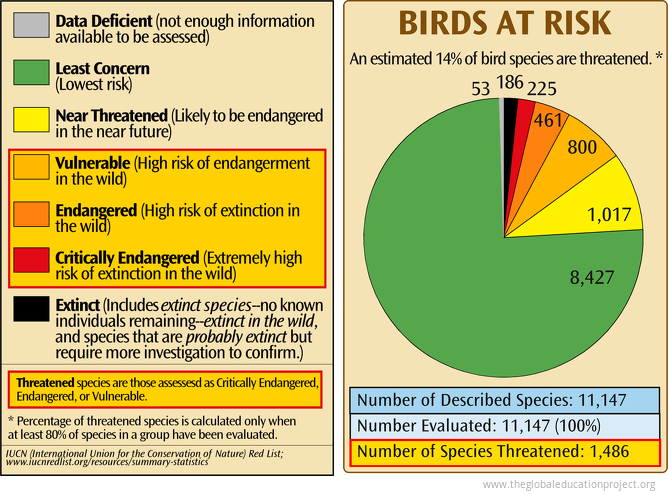 Birds at Risk of Extinction