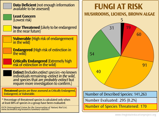 Fungi at Risk of Extinction